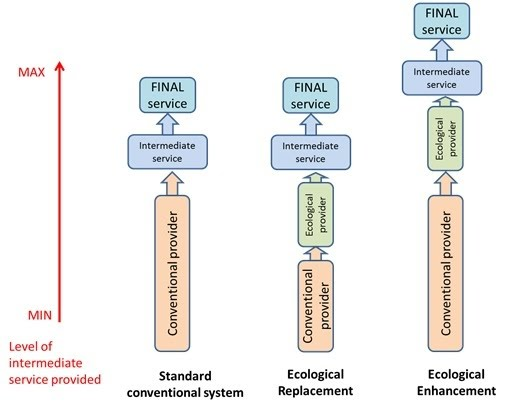 Ecological intensification