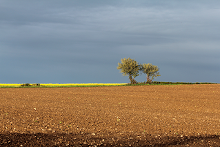Photo by David Kleijn: Empty farmers field with trees